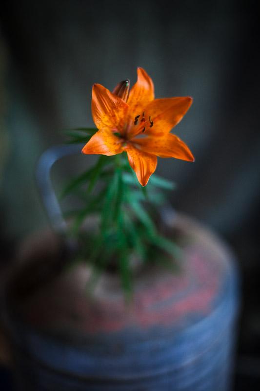 BlommaTank