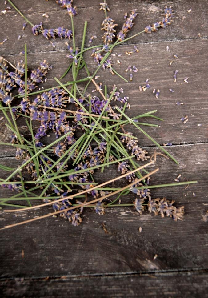 Lavendel_7922