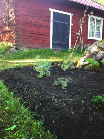 TrädgårdslandPlantor